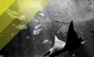 Il miglior flash subacqueo per chi le foto le fa sott'acqua: Olympus UFL-3